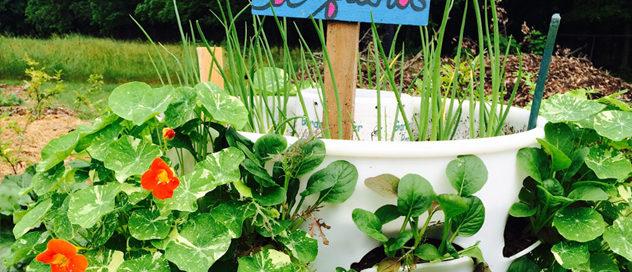 Hussagram: Garden tower greens