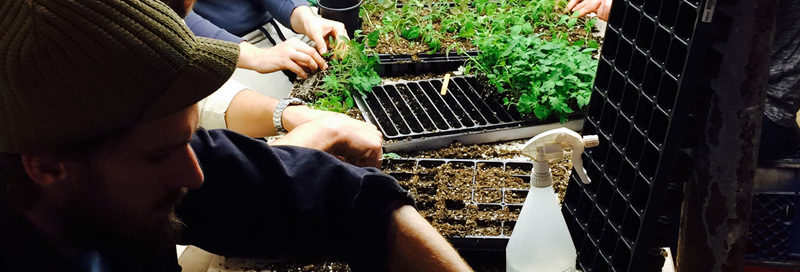 Hussagram: Potting up tomatoes
