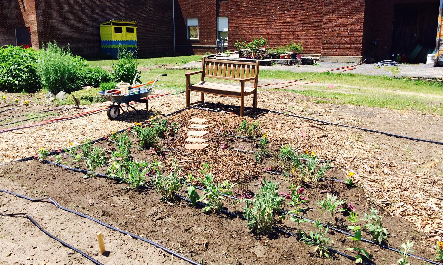 Hussagram: New perennial garden
