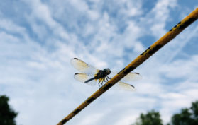 Hussagram: Follow this dragonfly to Future Fest!